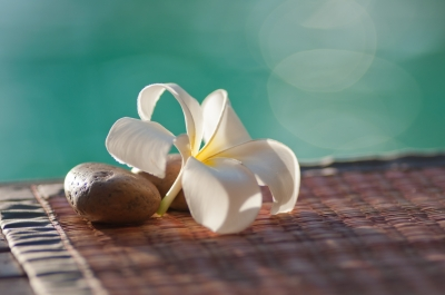 plumeria_by_artzsamui_of_freedigitalphotosdotnet